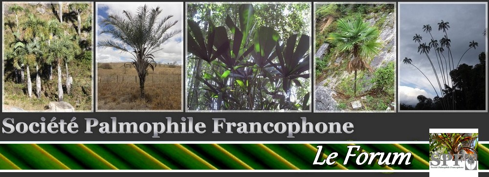 La Société Palmophile Francophone