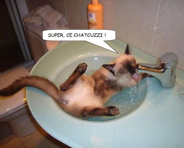 Images du jour sur les chats - Page 12 Dyn00310