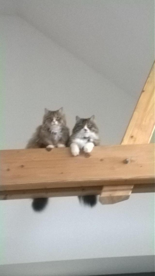 Ava et Izzie sont grandes maintenant V_43a310