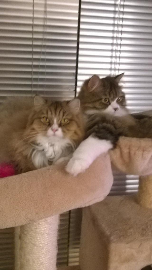 Ava et Izzie sont grandes maintenant Wp_20112