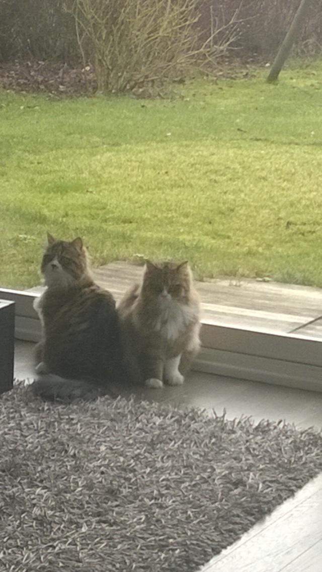Ava et Izzie sont grandes maintenant Wp_20113