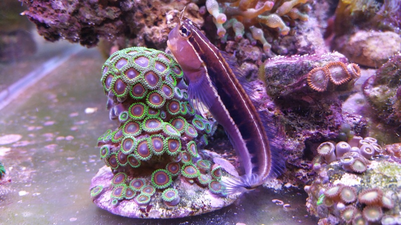 THE MINI BILLY'S REEF 20150410