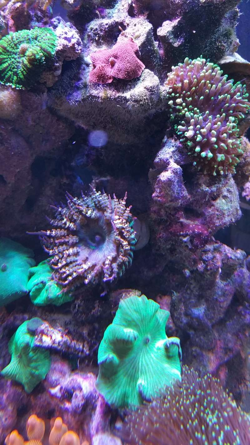 THE MINI BILLY'S REEF 20150411
