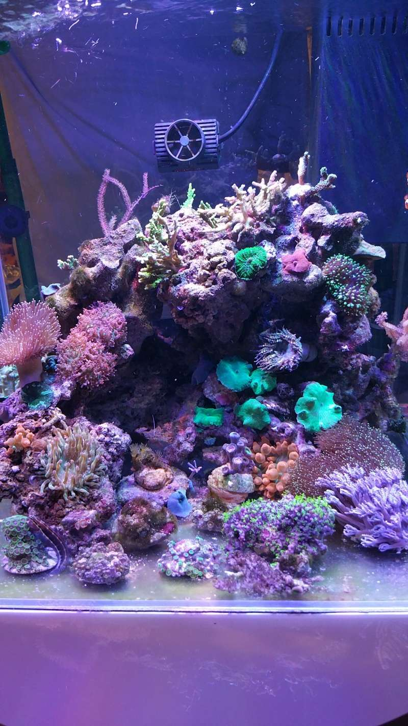 THE MINI BILLY'S REEF 20150412