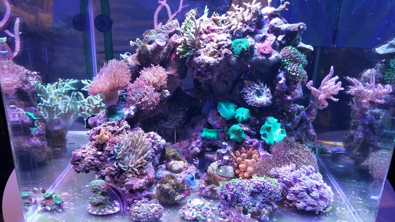 THE MINI BILLY'S REEF 20150414