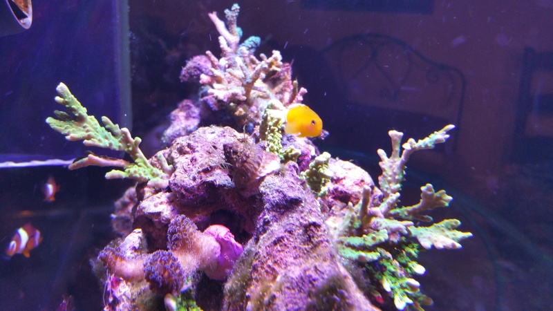 THE MINI BILLY'S REEF 20150415