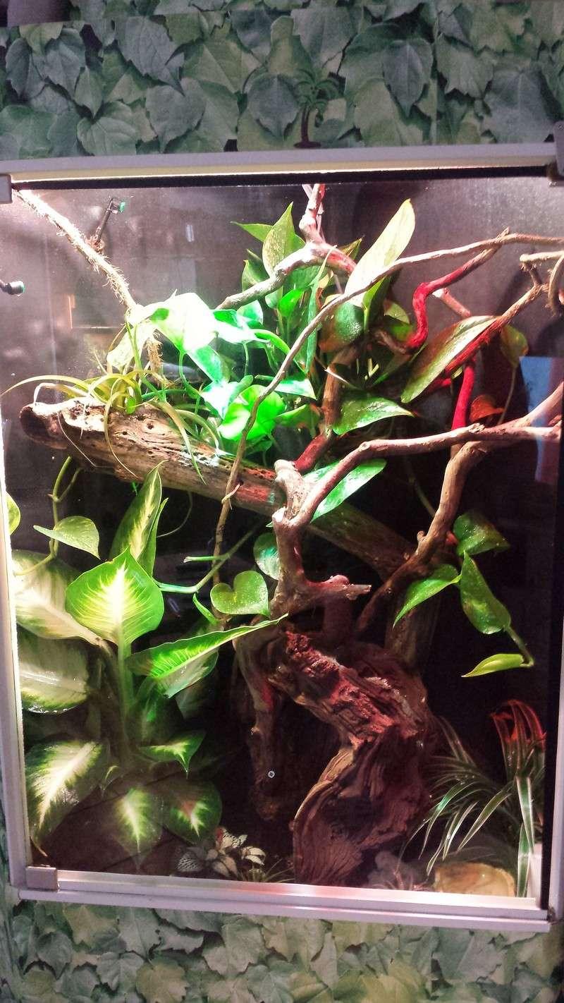 Modification projet pour installation terrarium tropical avec Anolis - Page 6 20150410