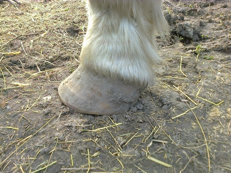 Avis sur mes pieds-nus Photo013