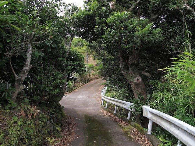 À la découverte d'Aogashima, 311