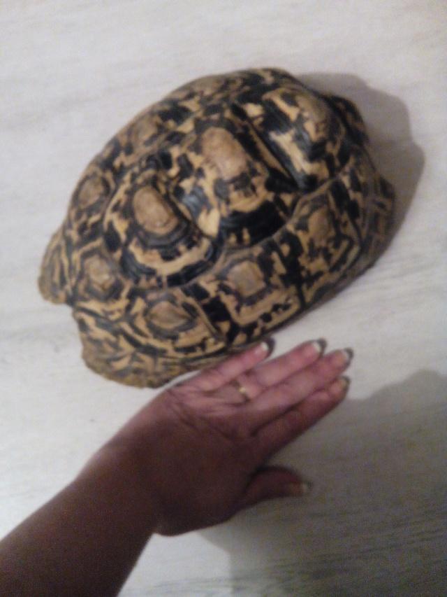 voici ninja une pardalis de 2kg 500 Img_2011