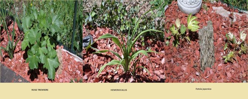 reamenagement de mon bassin de jardin - Page 4 Sam_0915