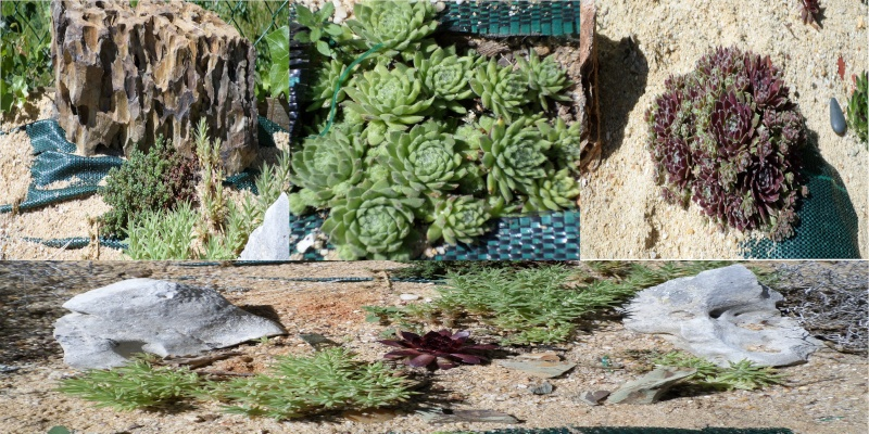 reamenagement de mon bassin de jardin - Page 4 Sam_0918