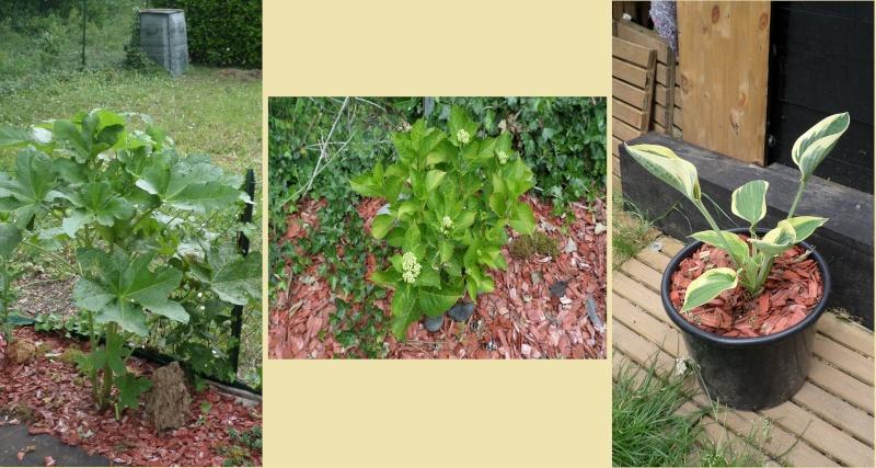 bassin de jardin 8000L - Page 2 Sam_1112