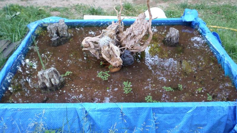 bassin de jardin 8000L - Page 2 Sam_1116