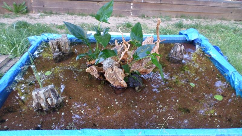 bassin de jardin 8000L - Page 2 Sam_1121