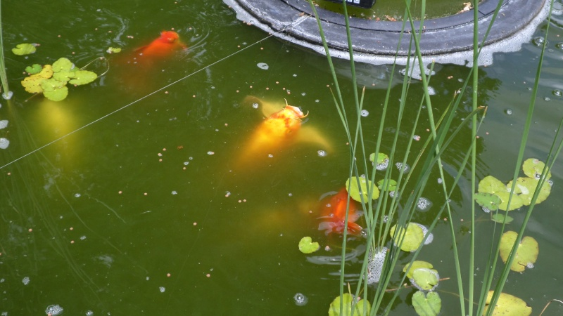 bassin de jardin 8000L - Page 2 Sam_1138