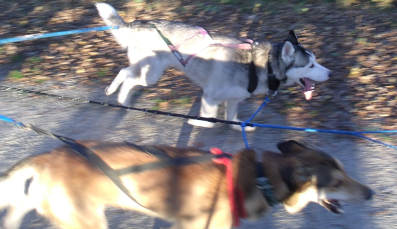 Audie the Wonderdog Gedc2610