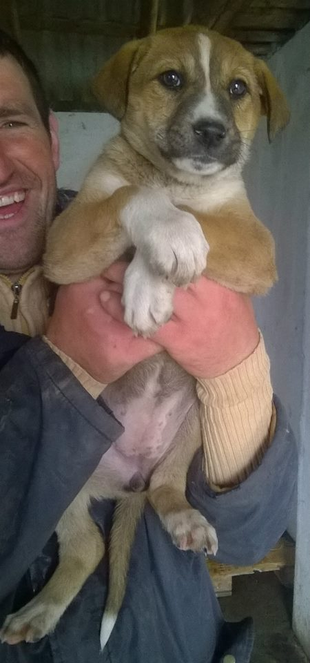 sunny - SUNNY- femelle, taille moyenne née en janvier 2015 (Pascani) - adoptée par Frédérique (57) 11148410