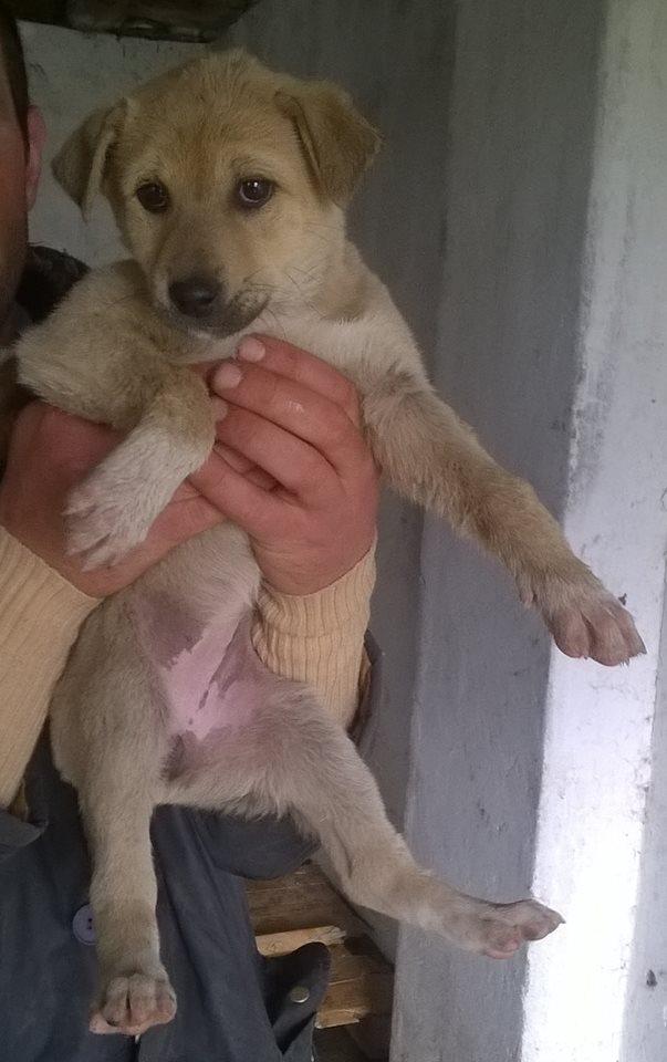 SUNSHINE- chiot femelle, taille moyenne né en janvier 2015 - (Pascani)-En pension chez Lucian 13270_10