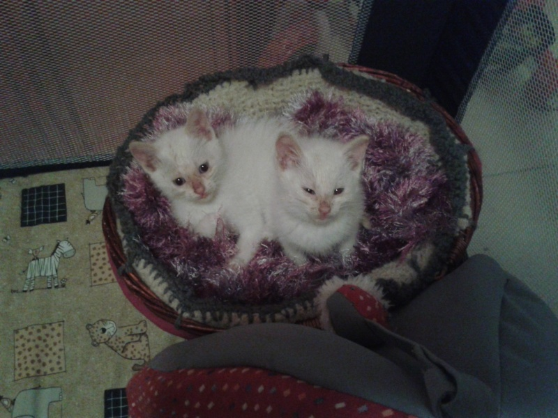 Sauvetage de chatons 2015-030