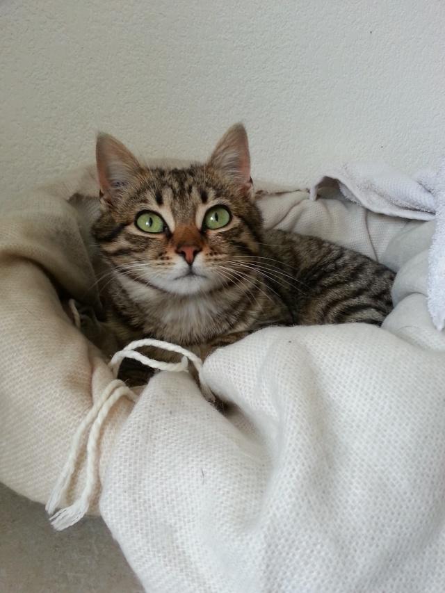 (adoptée)Lili 6 mois (13) 20150310