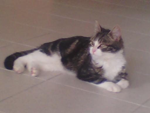 (adopté)Léo, 5/6 mois (13) Lyo10