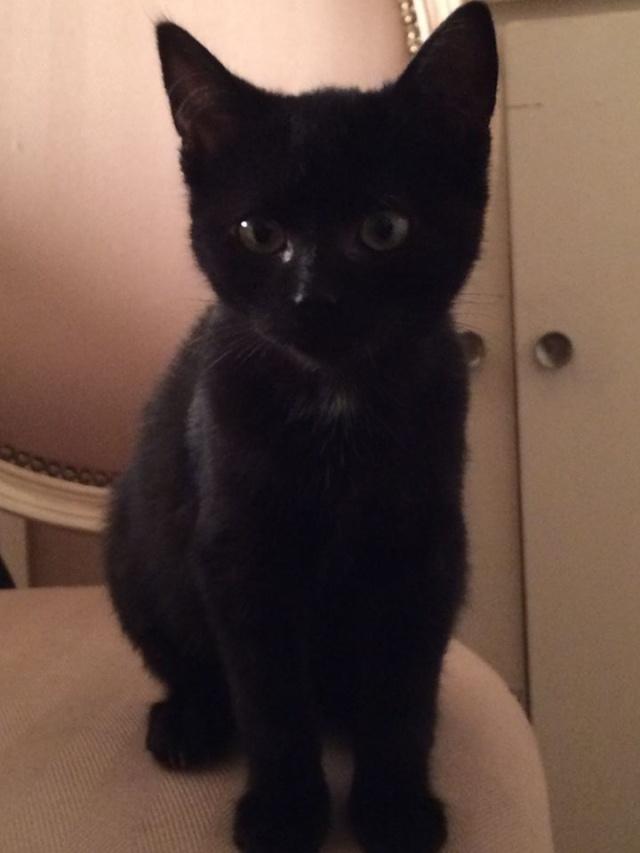 (adopté) Help pour Ruby chaton noir (13) Ruby10