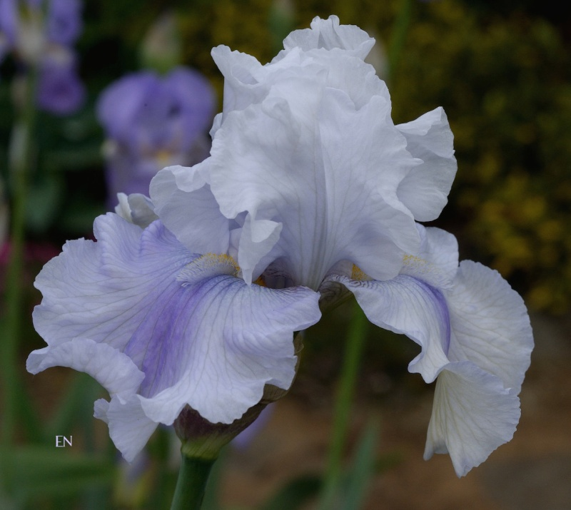 Floraison 2015 Dsc_2710