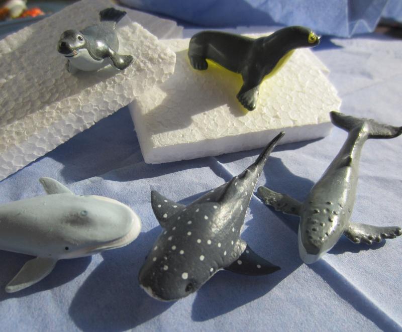 Panini Sealife animals for Susanne Img_5819