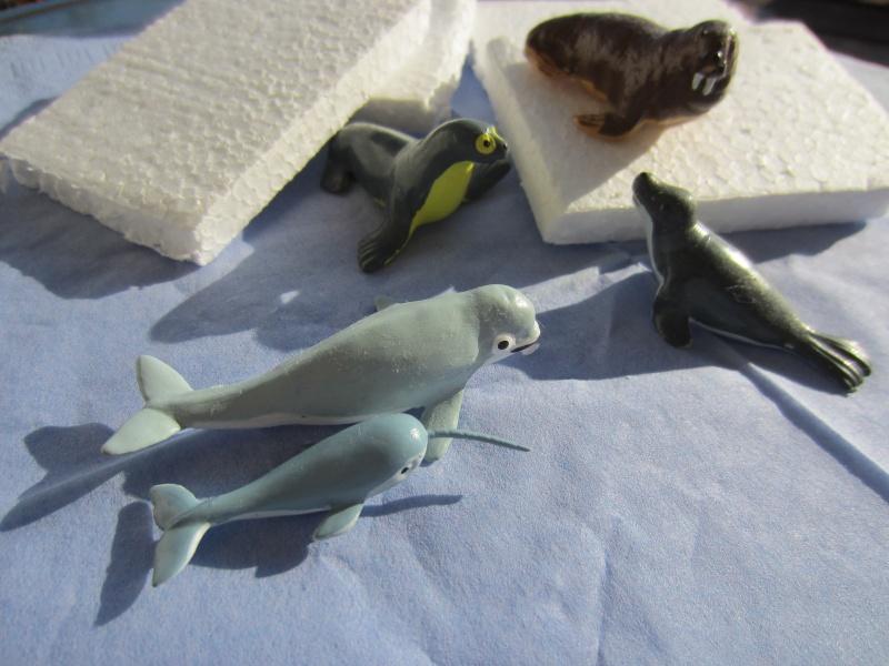 Panini Sealife animals for Susanne Img_5830