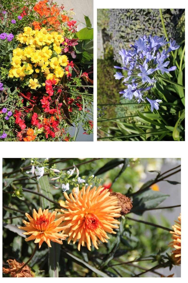 Comment mettre plusieurs photos sur une seule 10x15 Fleurs10