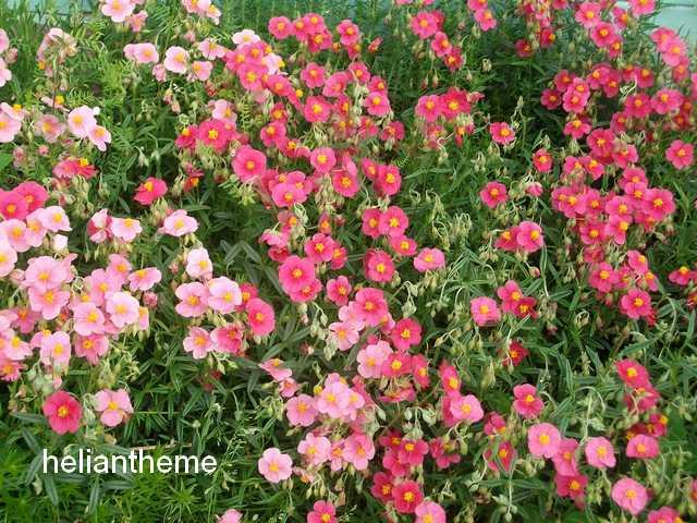 44 - prochain concours photos - Vue printanière de votre jardin ! - Page 3 Imgp0124