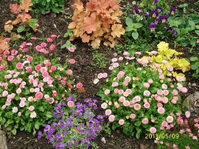 44 - prochain concours photos - Vue printanière de votre jardin ! - Page 3 Mai_0312