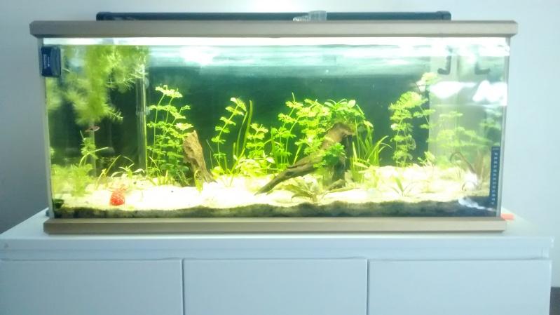 Mon aquarium 160l petite demande de conseils  - Page 2 Img_2013