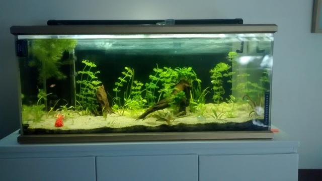 Mon aquarium 160l petite demande de conseils  - Page 2 Img_2014
