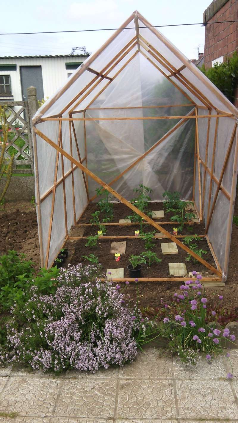 tunel pour mes tomates Img_2061