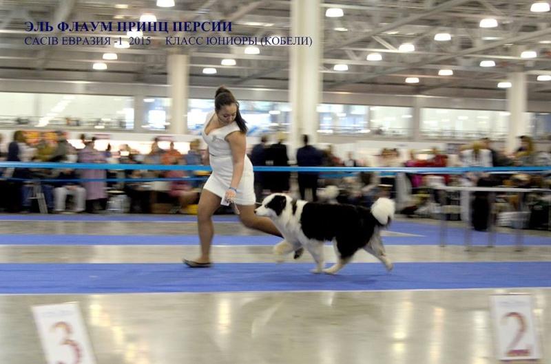 """Интернациональная Выставка Собак """"ЕВРАЗИЯ-2015"""" (Двойной CACIB) 21-22 марта 2015 г. 311"""