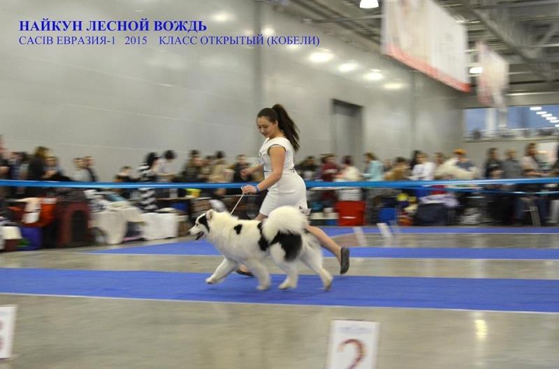 """Интернациональная Выставка Собак """"ЕВРАЗИЯ-2015"""" (Двойной CACIB) 21-22 марта 2015 г. 410"""