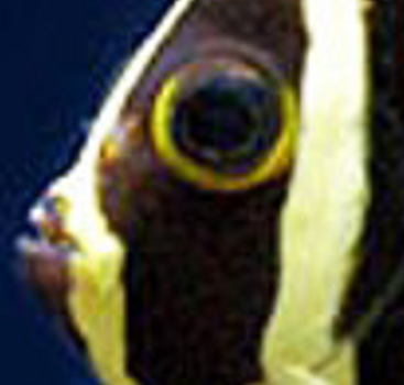 Guess the animal in the close up pic game. French10