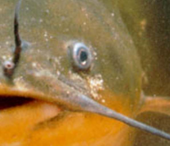 Guess the animal in the close up pic game. Game_210