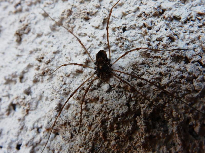 [résolu]Amilenus aurantiacus - femelle Dscn5322
