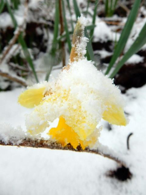Le printemps est là... Sscn3712