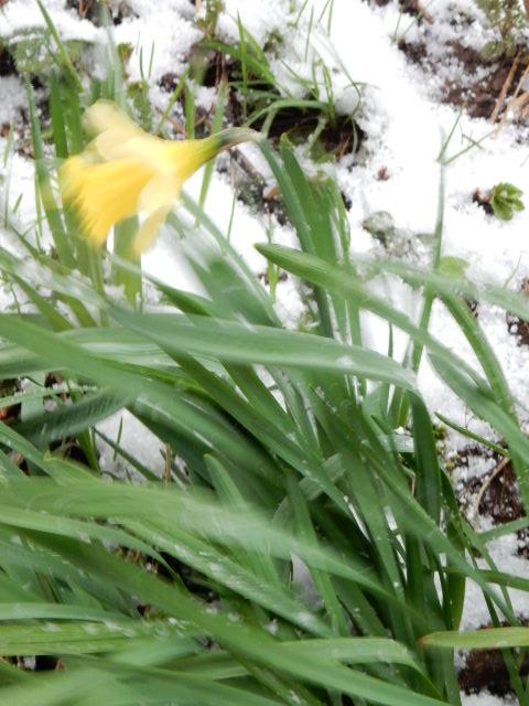Le printemps est là... Sscn3720