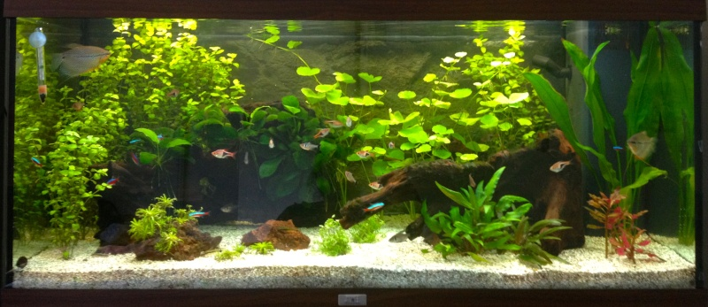 pourriture plantes+algues Img_5810