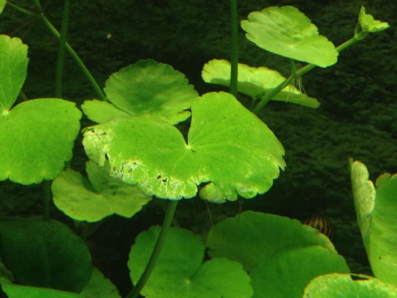 pourriture plantes+algues Img_5811