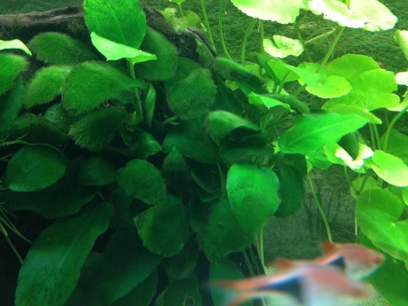pourriture plantes+algues Img_5816