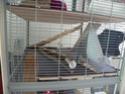 grande cage Nouvel22