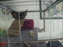 grande cage Nouvel23