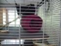 grande cage Nouvel24