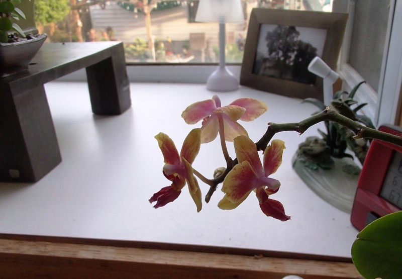 from the garden center orphan shelf P5220011